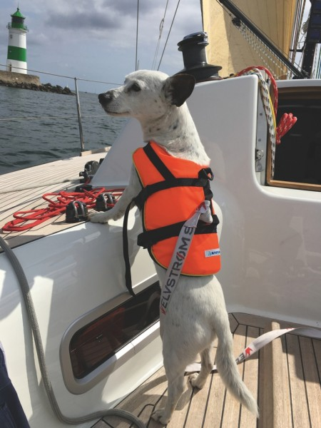 Hunde und Katzenrettungshilfe